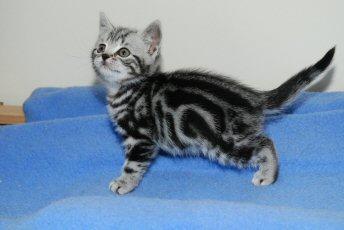 Kitten Sexton Pics 99
